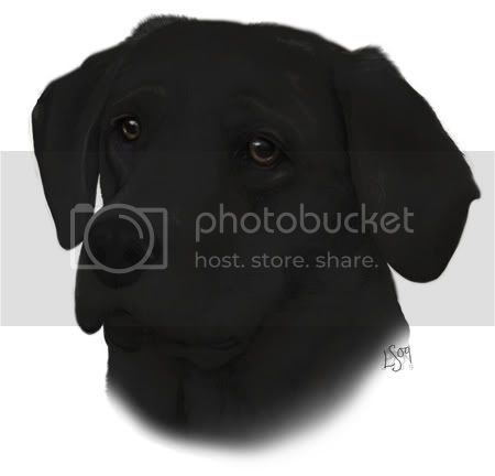 Black Labrador Retriever Image